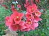 1137 (en-ri) Tags: fiorellini little flowers sony sonysti cespuglio