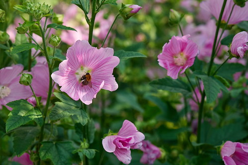 Flower 214 ©  Alexxx Malev