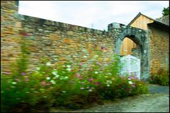 20160824-168 (sulamith.sallmann) Tags: pflanzen blume blumen blur cotentin flower flowers france frankreich lahague manche mauer normandie pflanze plants siouville stein stone tor unscharf wall fra sulamithsallmann