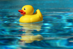 Summer Reflection (VenturaMermaid) Tags: pool water blue yellow rubberduck rubberduckie play toy bath outside outdoor sunny bright daytime reflection agua azul dof float floating