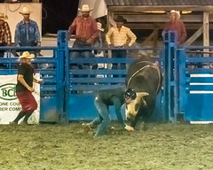 DSC_4600-Edit (alan.forshee) Tags: rodeo horse cow ride fall buck spin twirl bull stallion boy girl barrel rope lariat mud dirt hat sombrero