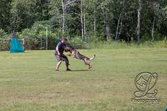 GSD-4590 (jim_lamy) Tags: gsd ipo germanshepherd schutzhund workingdog