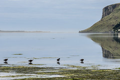 Paradise x4 (Ian@NZFlickr) Tags: ducks paradise papanui inlet sea lagoon cliffs reflections pacific coast otago peninsula dunedin nz