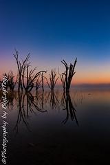 IMG_5551 (biglaptogs) Tags: barmera lakebonney riverland sa states sunsetsunrise