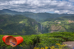 Colourful Nature (MarzookCasim) Tags: nature ooty tea plantation colours landscape canon clouds