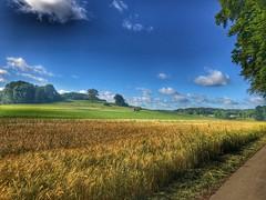 MTBTour über die schwäbische Alb zur Donau (Blende2,8) Tags: schwäbischealb iphone wolken himmel badenwürttemberg deutschland bäume viehweide scheune vieh rind weizenfelder felder wiesen wald feldweg weg