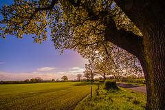 Back in the Day (iratebadger) Tags: nikon nature nikonphotography natural d7100 dark daytime tamron1024mm trees tamron tree treetrunk trunk leaves sky skyscape sunlight sun summer green grass field farmland countryside country colours colors