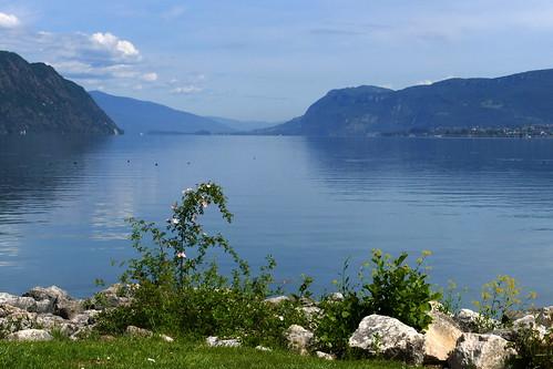 Lac du Bourget églantier_1
