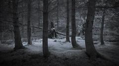 The Séance (Glenn D Reay) Tags: woods woodland dark eerie haunting trees quiet monochrome mono olympusep1 infrared 720nm zuiko1442ii glennreay