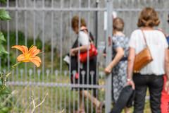 entrata di riserva (Clay Bass) Tags: angelina roccaforte battesimo d500 family flowers gate nikon