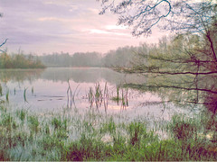 Frühjahrsmorgen (Christian Knobeloch) Tags: wasser see schilf drausen wald bäume äste pflanzen grün pink neblig diesig sonnenaufgang reflexion spiegelung kontrast landschaft himmel wolken