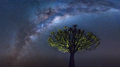Quiver tree starbow dream (3dgor 加農炮) Tags: quiver tree milkyway galaxy stars star starbow namibia keepmanshoop africa night landscape astrophotography