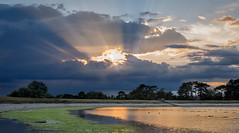 Reservoir Sunset (femmaryann) Tags: sunset sunshine sunrise golden blue algae trees nature natural clouds scenery beauty water lake green gold outdoors serene beautiful powerful power energy