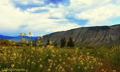 Valley (Birinchi Hazarika) Tags: blue water lonelyplanet nationalgeographic hotspring yellowstone yellowstonenationalpark usnationalpark nature