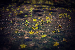 scattered yellows...