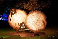 20170531-38-VIvid Light display at Sydney Botanic Gardens (Roger T Wong) Tags: 2017 australia nsw newsouthwales rogertwong sel2470z sony2470 sonya7ii sonyalpha7ii sonyfe2470mmf4zaosscarlzeissvariotessart sonyilce7m2 sydney sydneybotanicalgardens vivid birds festival lights night