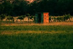 Hunting sun (In Explore 06/07/2017) (Mattia Ferraboli) Tags: sun sunset gold goldenhour hunt hunter hunting field deepoffield dof spring 2017 italy 70d 70300mm ef70300mmf456 ef70300mmf456isusm canon70d canonef70300mmf456isusm canon vineyard grass tree trees sky yellow orange green shelter huntinglodge lodge