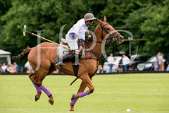 © 2017 Photographs by Robert Piper- All Rights Reserved 715 _ (Ham Polo Club) Tags: jacaranda challengematch vendetta 2017the london polo club tw107ah england gbr