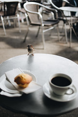 Coffee with a friend (borishots) Tags: friend coffee coffeetime coffeelover coffeeshop coffeecup coffeemug hot hotcoffee muffin muffins sweet sweets table sparrow bird animal animals pet bokeh bokehlicious bokehwhore canon6d canonef35mmf2 35mm f2 wideopen wideangle grain