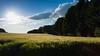 Tierpark 6 (FSR Photography) Tags: tierpark himmel heaven light leaves licht lichtung bäume blumen feld canon canon400d canondslr clouds colors wolken blau green grün blue fsr fsrphotography