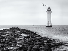 To the lighthouse (Tim Ravenscroft) Tags: lighthouse boat seagull newbrighton england monochrome blackandwhite blackwhite sea seascape perchrock