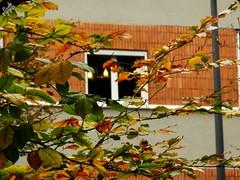 Luci di case... autunno milanese. (diegoavanzi) Tags: milano milan autunno autumn fall foglie leaves italia italy lombardia lombardy sony hx300 bridge parco finzi villa