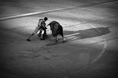 Doblon (aficion2012) Tags: istres francia france corrida bullfight bull toro toros taureau fundi elfundi juan pedro domecq tauromachie tauromaquia bw monochrome doblón matador torero toreo