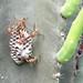Malvadas avispas / Evil wasps