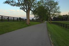 A bluegrass morning... HFF! (MarcusDC) Tags: lexingtonky road kentucky fence morning bluegrass