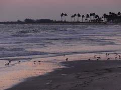 "Shorebirds at sundown on Captiva • <a style=""font-size:0.8em;"" href=""http://www.flickr.com/photos/16155010@N04/34918601190/"" target=""_blank"">View on Flickr</a>"