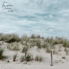 Dunes of Noordwijk (Capture Dreams) Tags: dunes beach sea northsea noordwijk sand