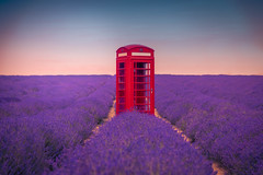 Phone home (Andrew Thomas 73) Tags: nikond810 lavender fields telephone box flower