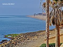 Almería. Roquetas. 15 Playa (ferlomu) Tags: almeria andalucia arbol ferlomu mar palmera playa roquetasdemar