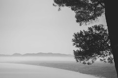 I'm Off To See The Sea ... (Ged Slaughter Photography) Tags: sea seascape landscape tree conifer gedslaughter coast coastal bay mist misty stark bw sicilia sicily italy italia