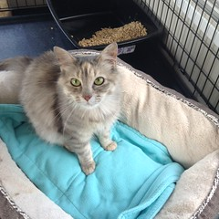 Sandy - 1 year old spayed female