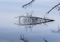 Peegeldus järves (BlizzardFoto) Tags: peegeldus reflection järv lake oks branch vesi water