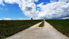 Sur mon chemin (Fabrice1965) Tags: suisse berne canton orvin prêles plateaudediesse chemin paysage arbre ciel nuages