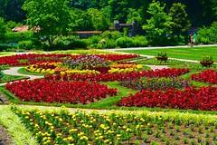Biltmore Estates flower gardens (Edale614) Tags: flowers nature roses northcarolina biltmore