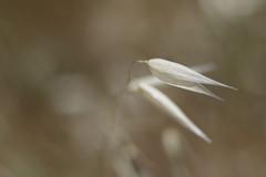 Seed (Manolo Calabuig) Tags: flor flower vaina semilla dof otw bokeh