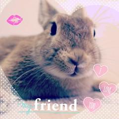 ICHIGO san 26 (Ichigo Miyama) Tags: いちごさん。うさぎ ichigo san rabbit うさぎ netherlanddwarfbunny netherlanddwarf brown ネザーランドドワーフ ペット いちご