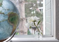 Current view (Suu's) Tags: windowsill bokeh bokehlicious stilllife