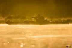 ''Un passionné!'' (pascaleforest) Tags: landscape paysage passion nikon nature goldenhour heuredoré eau lac water kayak printemps spring mist brume photographe wild wildlife faune marais