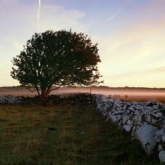 Sheep Yard - Velvia 100 exp* (magnus.joensson) Tags: sweden swedish öland island sunrise alvaret hasselblad 500cm zeiss planar 100mm cf fuji velvia 100 exp exp2007 e6 6x6