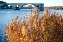 Rhône Morning #2 (A. Nothstine) Tags: avignon france provence rhone south winter christmas river morning pont davignon sunlight