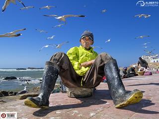Essaouira Fisherman and Seagulls