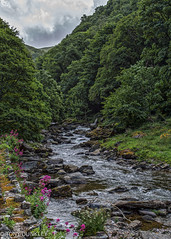 Upstream (cricketlover18) Tags: eastlynriver lynmouth watersmeet