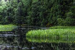 Nature ❤️ (D.Sinkute) Tags: gamta nature water pond flowers woods forest skog tvenkinys canon norge norway norvegija daylight green summer vasara