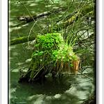 Andreas Kalbow Landschaft 2017.05.26 Fischland Darß (7) thumbnail