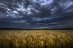 sommerabend (manfred-hartmann) Tags: abends felder getreide himmel korn kornfeld lichtzauberwerk manfredhartmann sonnenuntergang wolken germany