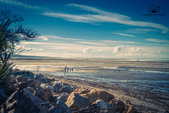 Standing Tall (CFBoucher Photography) Tags: photography new zealand nz beaches winter south island landscape sun water sand walking sunset sunrise canon 1740 shooting rocks trees nature